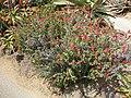Gardenology.org-IMG 4347 hunt0904.jpg