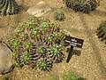 Gardenology.org-IMG 7478 qsbg11mar.jpg