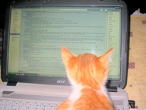 cat looking at computer screen