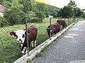 Geilles (Oyonnax) dans l'Ain en France - 3.JPG