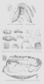 Geology and Mineralogy considered with reference to Natural Theology, plate 27d.png