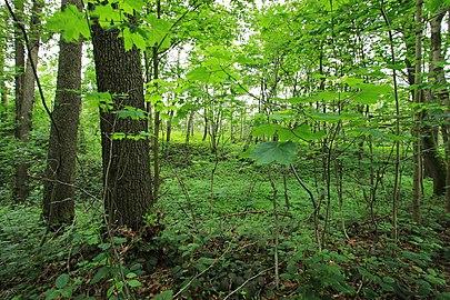 Geschützter Landschaftsbestandteil Schubertgrund in Sachsen. 2H1A1051WI.jpg