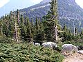 Glacier-park-mountain-goats.jpg