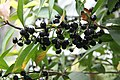 "Gradina Botanica ""Vasile Fati"" (4657191062).jpg"