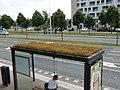 Groene bushalte in Utrecht Terwijde.jpg