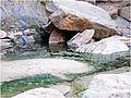 Grotto Pool, Zion NP, Riverside Walk 5-1-14ze (14295427940).jpg