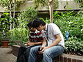 Hacking in the Barbican Conservatory on day 2 of the Wikimania 2014 hackathon 01.jpg