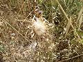 Hadassah Trail P1150451.JPG