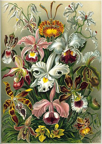 Introduction to evolution - Darwin noted that orchids have complex adaptations to ensure pollination, all derived from basic floral parts.