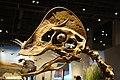 Hagryphus giganteus skull salt lake city.jpg