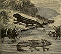 Half hours with fishes, reptiles, and birds (1906) (14772088373).jpg