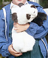 Handpuppe Panda, Kaninfell, 1984.jpg