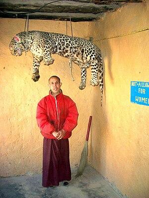Tangyud Monastery - Monk standing under stuffed leopard, Tangyud