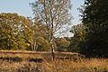 Herbst Elfenmeer 2.jpg