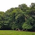 Highgate Wood 20170623 153925 (49401141647).jpg