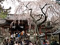 Himuro Shrine - panoramio - Tomi Mäkitalo.jpg