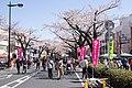 Hitachi Sakura Festival, Ibaraki 08.jpg