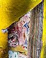 Holbeinpferdle Restaurierung jm94995.jpg