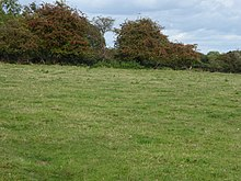 Hooks Well Meadows, Great Cressingham 4.jpg