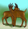 Hoplitomeryx matthei.jpg