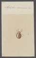 Hoplophora - Print - Iconographia Zoologica - Special Collections University of Amsterdam - UBAINV0274 072 06 0045.tif