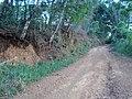 Horizonte A sobre horizonte C, com Cascalho, calhaus e matacões. Raízes de arvores de cerradão do cerrado do Alto Paranaíba no município de Arapuá MG - panoramio.jpg
