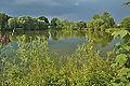 Horní rybník, Niva, okres Prostějov (03).jpg