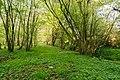Horn-Bad Meinberg - 2015-05-04 - LIP-004 Naptetal (18).jpg
