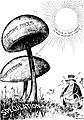 Hot sunshine is ruinous for mushrooms (Homer Stinson).jpg