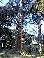 Ichijô-ji Temple - Sugi.jpg
