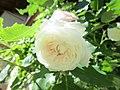 Ile aux Roses 027.jpg