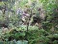 Im Steintal oberhalb von Lautenbach, Gernsbach (1).jpg