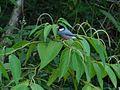 Is bird 1.jpg