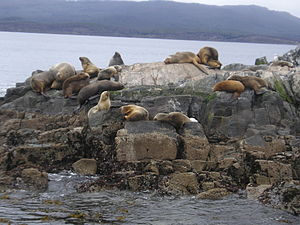 Tierra del Fuego - Sea lions at Isla de los Lobos in the Beagle Channel, near Ushuaia