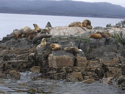 Sea lions at Isla de los Lobos in the Beagle Channel, near Ushuaia IslaLosLobos.jpg