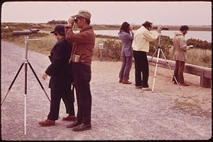 Jamaica Bay Wildlife Refuge - Bird watching has always been a popular activity at the Jamaica Bay Wildlife Refuge, June 1973.  Photo by Arthur Tress.