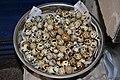 Japanese quail Coturnix japonica eggs by Dr. Raju Kasambe DSC 3217 03.jpg