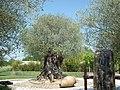 Jardins du Monde (Royan) - panoramio (8).jpg