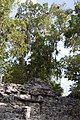 Jungle covered ruin Coba 6 (4373703233).jpg