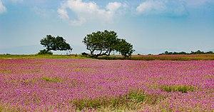Kaas plateau - Image: Kaas 7016