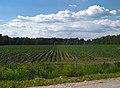 Karizha fields 06b.jpg