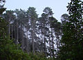 Karori Trees - Flickr - Teacher Traveler (1).jpg