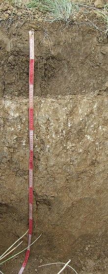 пахотной каштановой почвы,