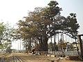 Katwa to Ahmedpur Narrow gaugue railway 09.jpg