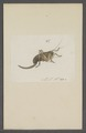 Kend - Print - Iconographia Zoologica - Special Collections University of Amsterdam - UBAINV0274 066 01 0090.tif