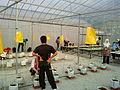 Kertas pelekat kuning tarik serangga perosak.JPG