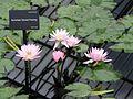 Kew Gardens 0388.JPG
