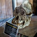 KgKuaiKandazon Sabah Monsopiad-House-of-Skulls-10.jpg