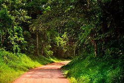 Kibale, Uganda.jpg