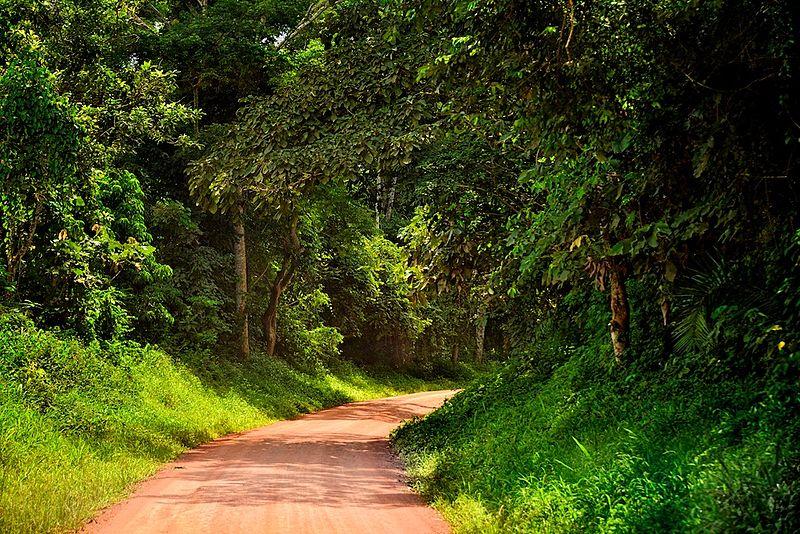 File:Kibale, Uganda.jpg